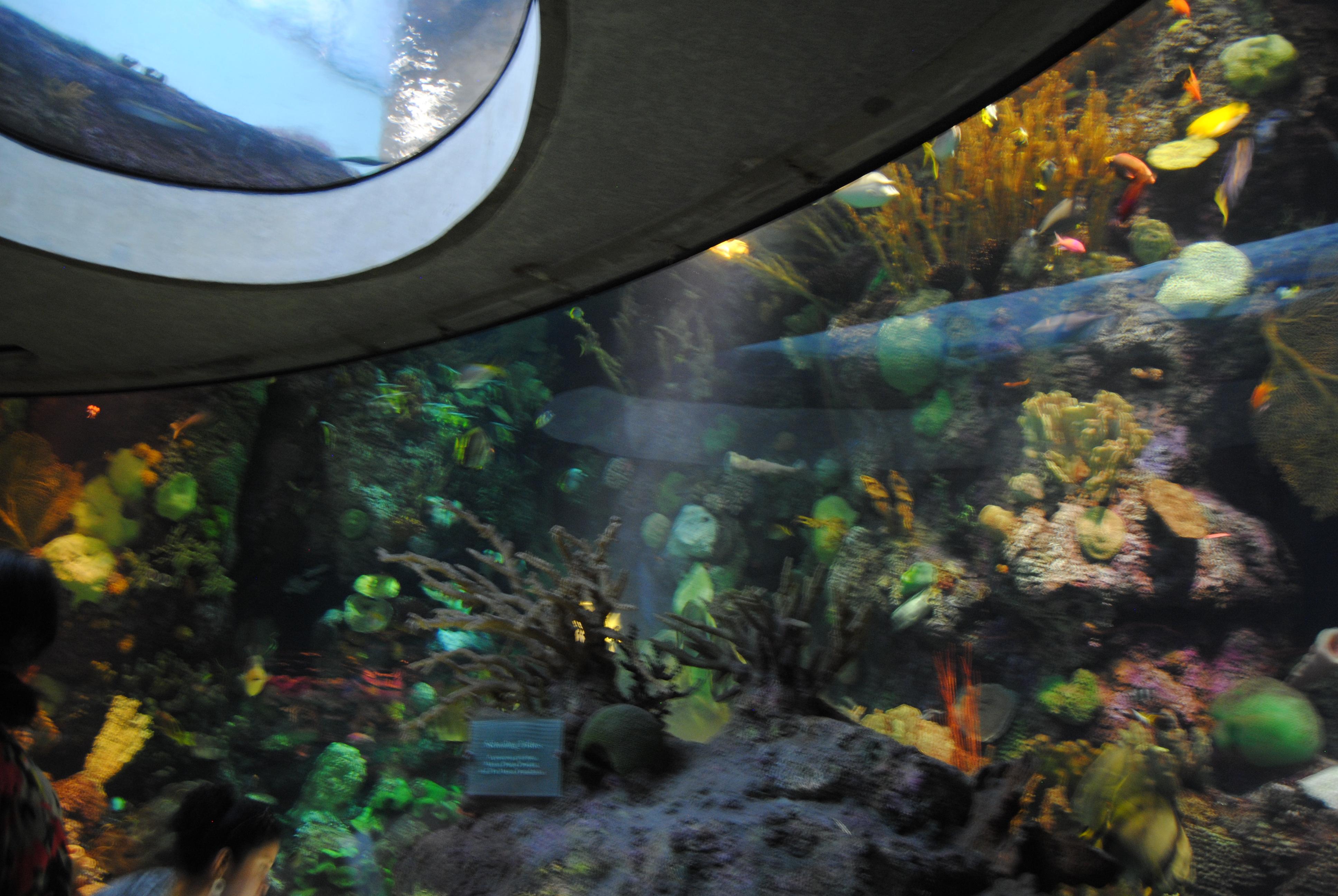 Shedd Aquarium School Tours